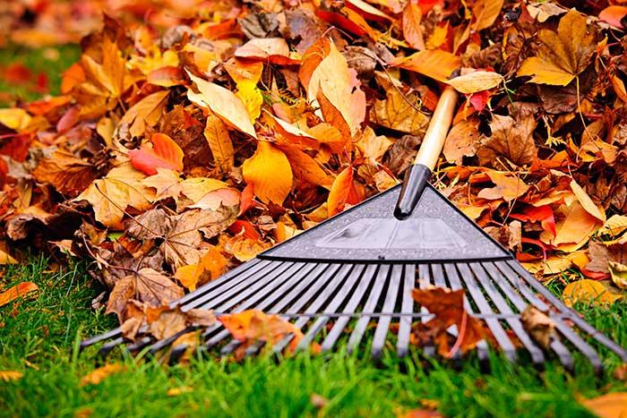Râtisser les feuilles mortes, pelouse